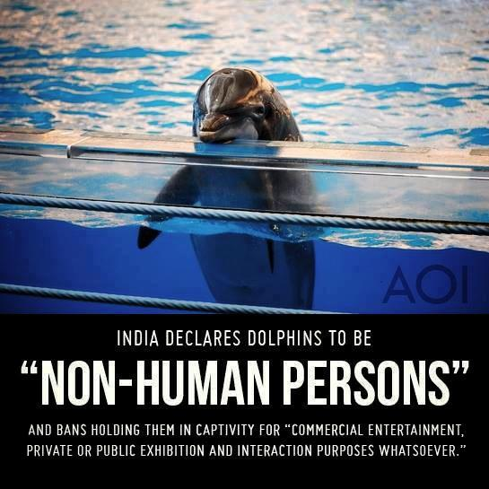 Dolphin persons
